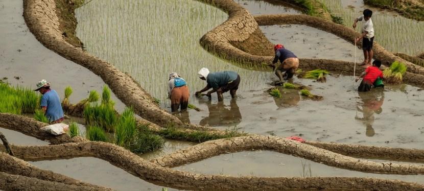 L'exploitation des ressources alimentaires est-elle durable ?