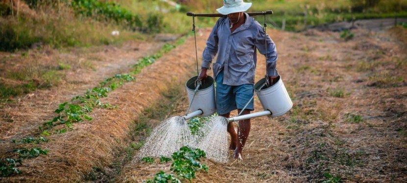 Le développement durable : une nécessité pour nourrir le monde ?