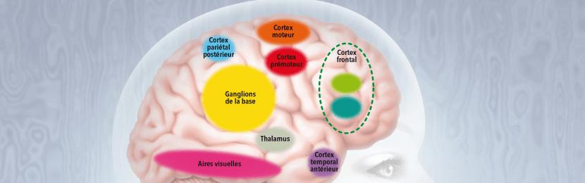 Olivier Houdé : Le (dé)confinement, exercice intelligent de contrôle inhibiteur ?