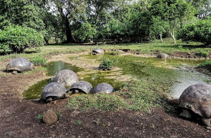 Visit Giant tortoises with Academy Bay Diving