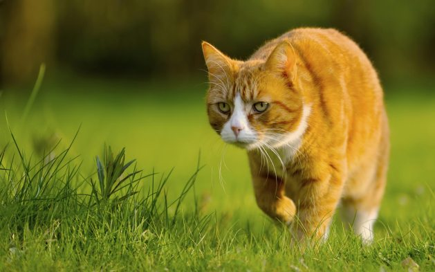 10 Tips to help fencers be light on their feet as cats