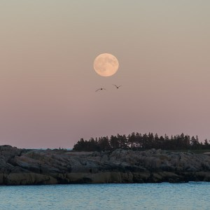 Full moon Acadia
