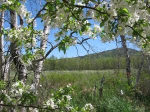 Jesup Path in acadia national park