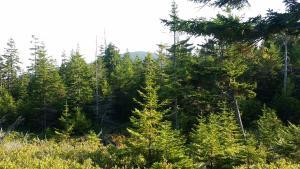 buck cove mountain