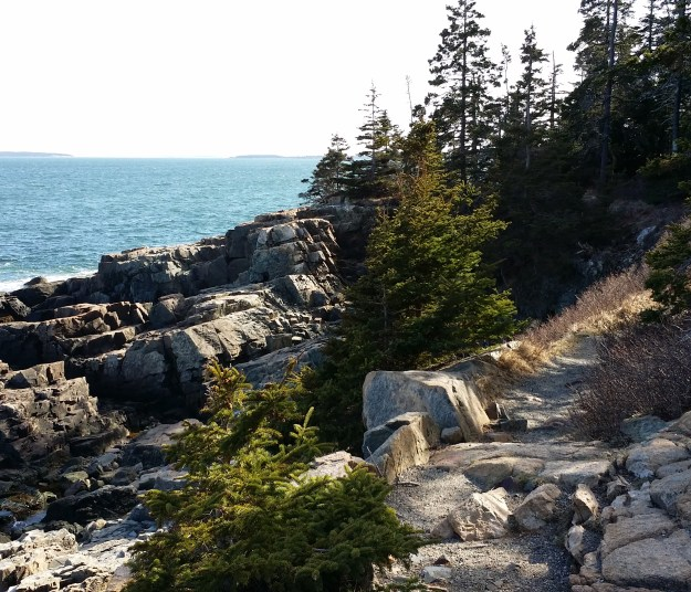 ocean path in acadia national park
