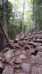Deer Brook Trail in Acadia National Park.