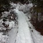 Snow-covered bog walk in Acadia National Park.