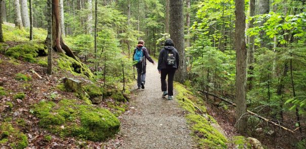 Seaside Path in Acadia National Park