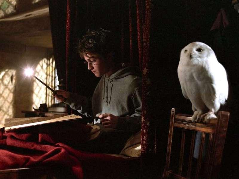 "De volta à magia. Há maratona de ""Harry Potter"" para ver na FOX"