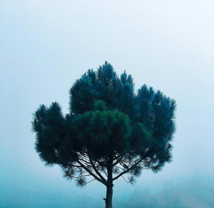 Los árboles son grises