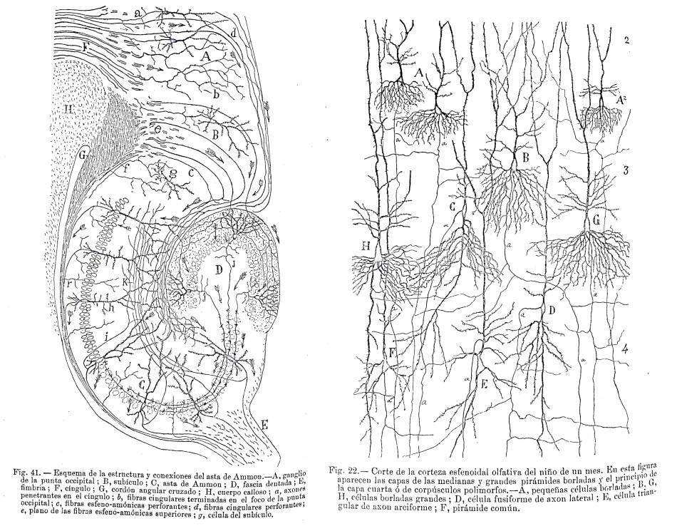 Dibujos de Santiago Ramón y Cajal incluidos en el primer volumen de Trabajos del Laboratorio de Investigaciones Biológicas.