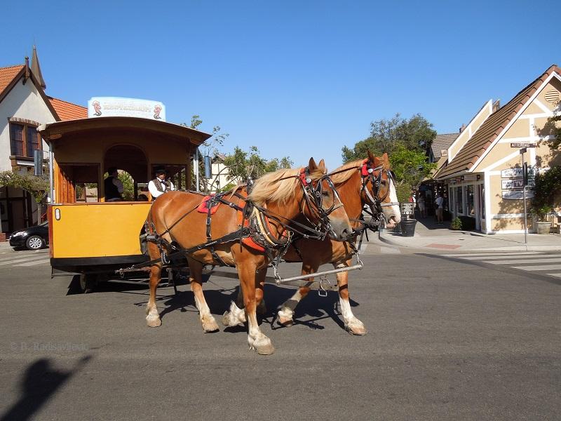 Horses I Meet on My Photo Walks