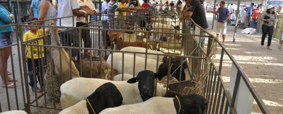 Décima Feira de Caprinos e Ovinos do distrito de Pinhões acontece no próximo fim de semana