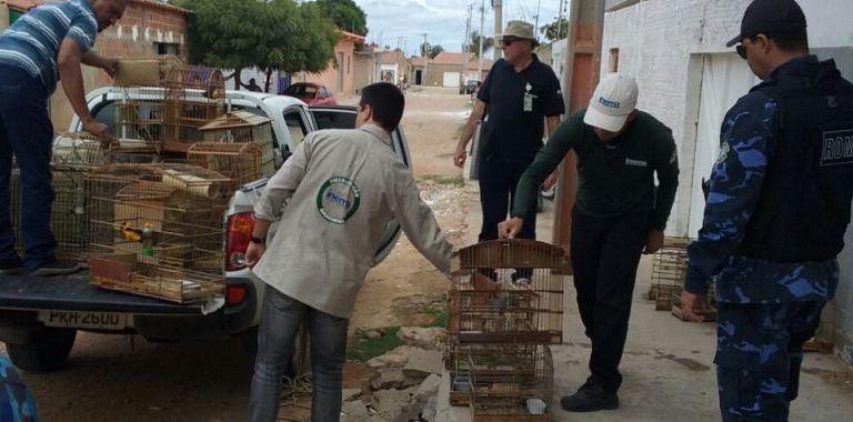 Guarda Municipal e INEMA realizam apreensão de aves silvestres em Juazeiro