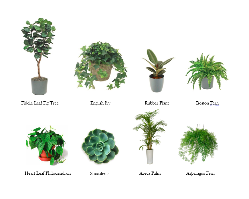 Plant-Types-1 Different Types Of House Plants Ffenbachia on