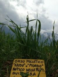 raetia-cereali-orzo-polisitico