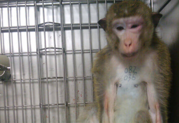 Primates in labs are driven crazy by                           isolation and sensory deprivation.