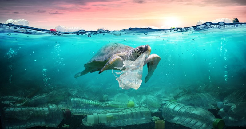 sea turtle swimming in the polluted ocean