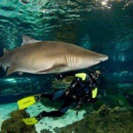 Ven a bucear con tiburones – Aquarium de Barcelona – 21 Abril 2021