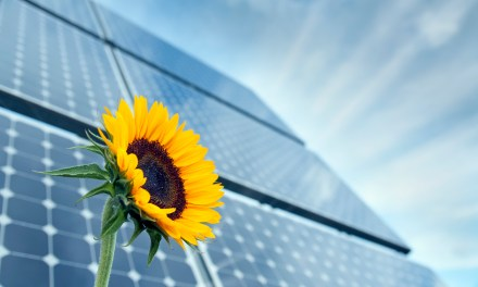 Solar Panels In Landfills: In Need of Some Circularity Thinking