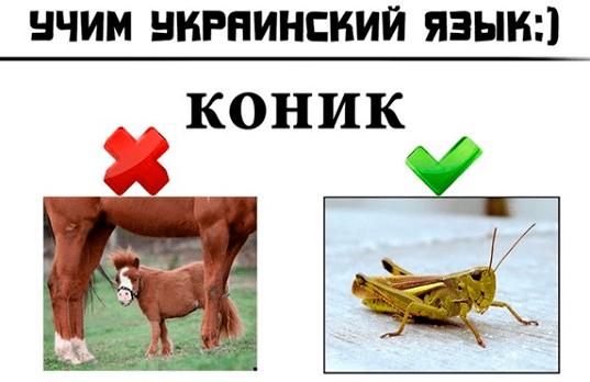 учим иностранные языки - accent-center.ru