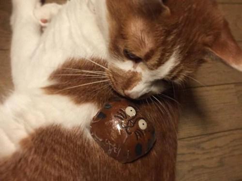 中目黒 Accent Color キモノゾメ 猫の形のおやつ