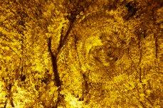 Autumn gold 01
