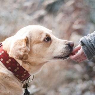Children's Hospital ofrece el poder de las mascotas para ayudar a los pacientes