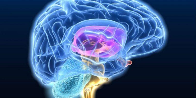 Nueva mirada a la expresión génica en el cerebro puede ofrecer pistas para tratar la enfermedad de Huntington