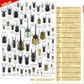 森の甲虫たち60クリアファイル