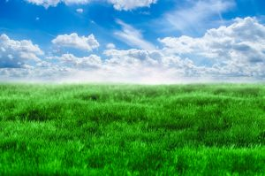 Image shows a landscape of green grass and a blue sky with white clouds above
