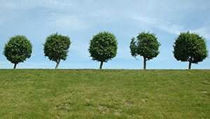 fa-trees
