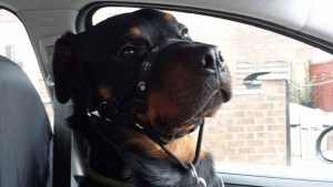 Mowgli - Sat in the front seat