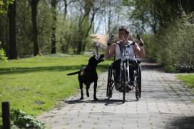 assistance-dog-balou