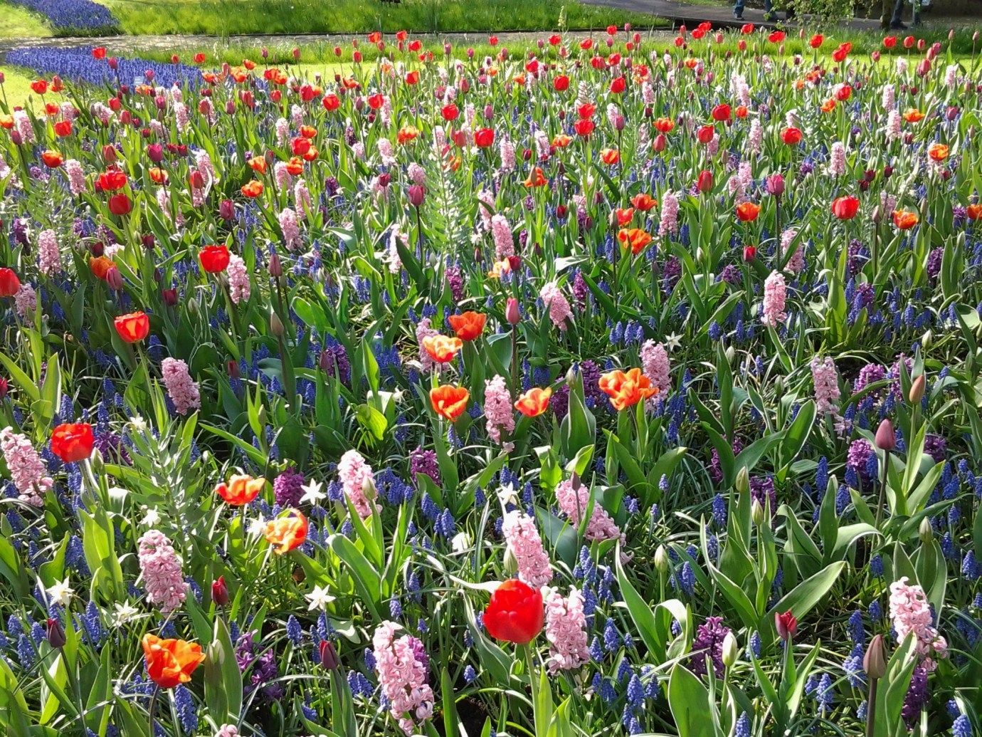 flowers the netherlands