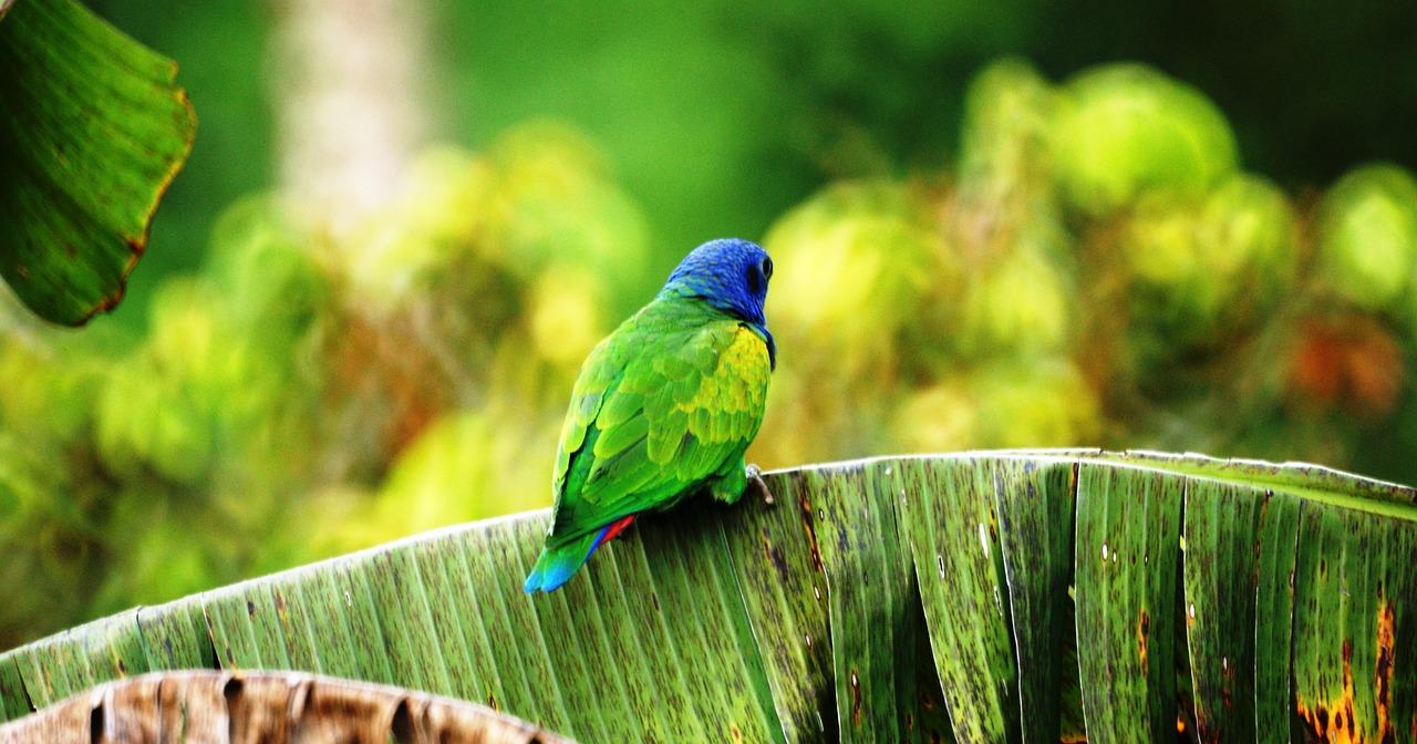 colombia bird
