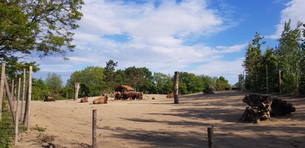 blijdorp zoo rotterdam the netherlands