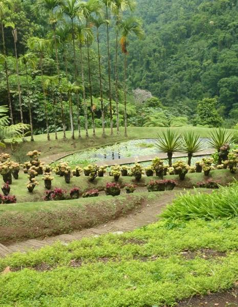 Martinique forest