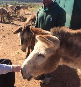 Donkey Noses and Vrolijkheid-ness