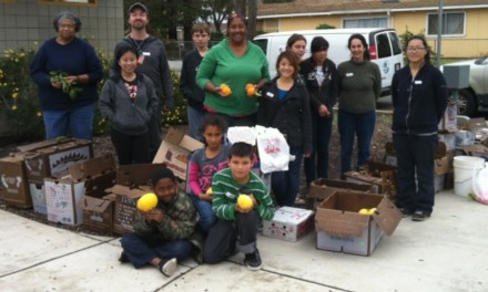 Harvest Sacramento collects 1500 lbs of fruit from residential trees