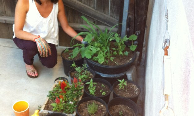 My summer roots – Why I started gardening