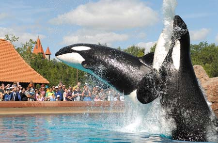 Marineland Splash Show
