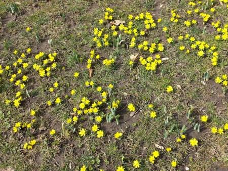 20160309_flowers_01