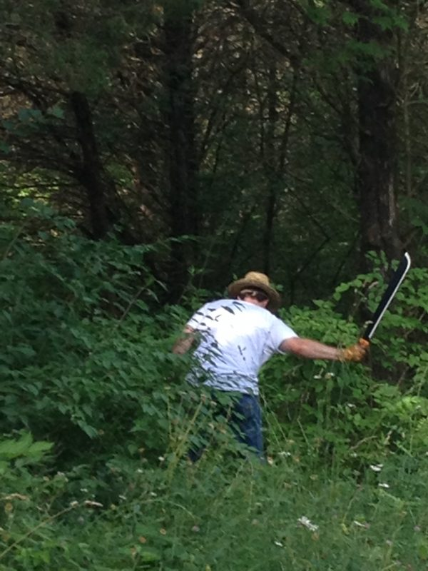 Mark clearing brush around a tree with a machete before chopping the tree down.