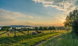 lake-constance-sheep-pasture-sheep-blue-158179 (1)