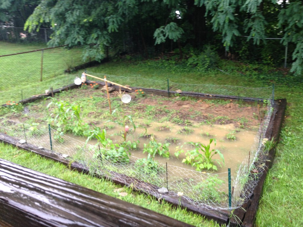 Our last suburban garden, BEFORE we knew about permaculture, swales, and good gardening techniques