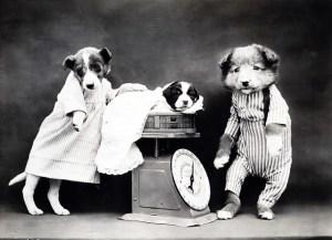 dog-316991_640