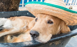 Keeping Your Dog Safe During the Summer