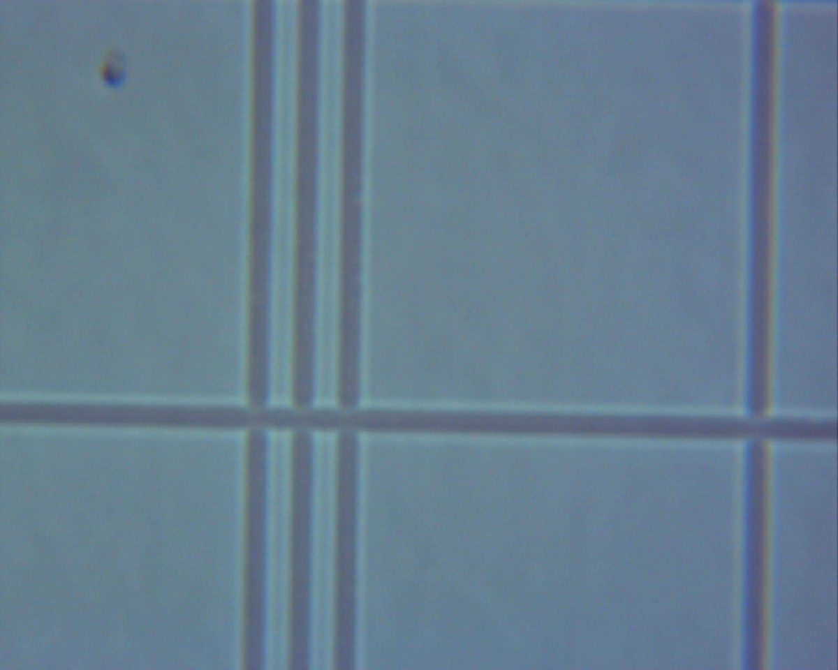 100X power objective. Lines from a bright-line hemacytometer