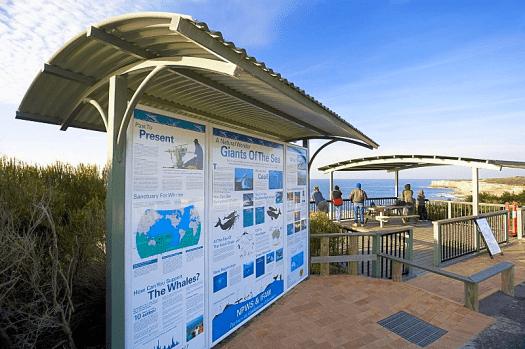 Image-of-Australia-nsw-whales-Cape-Solander